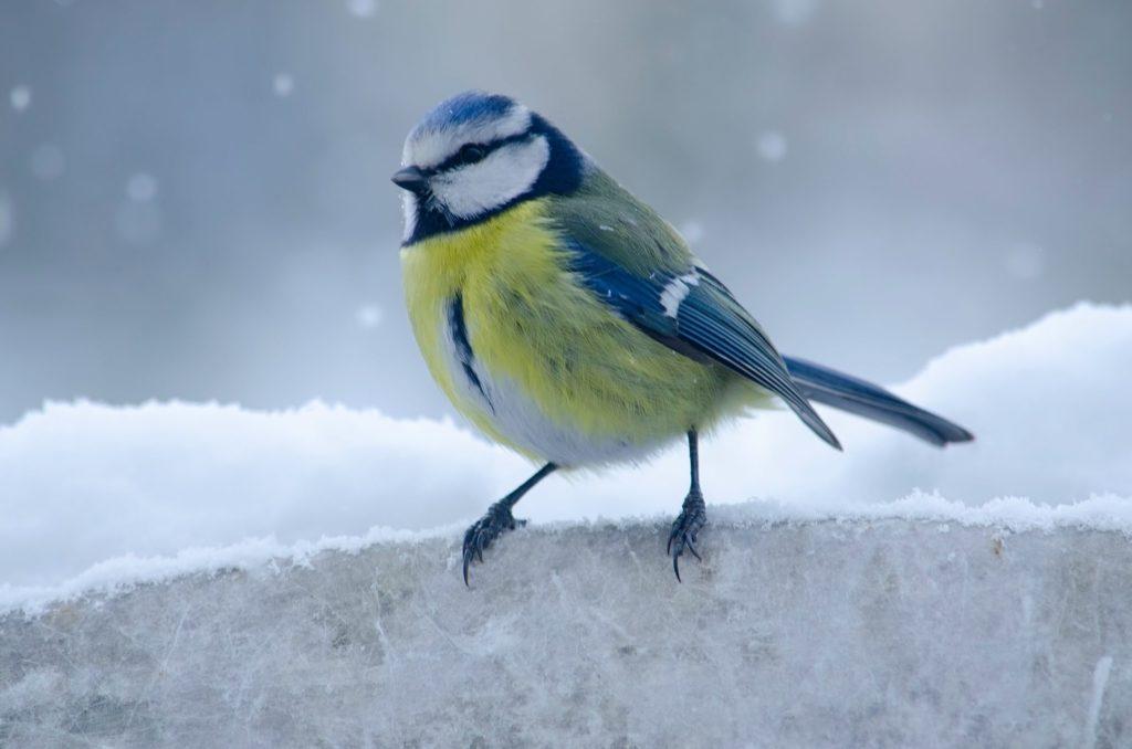 鳥生病會自己好嗎