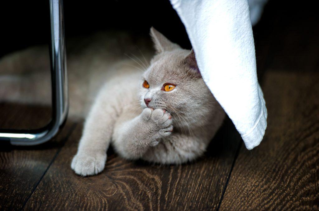 貓咪喜歡的味道