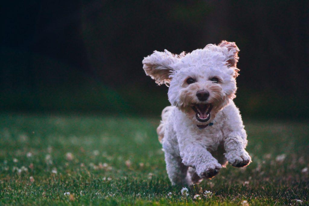 帶狗狗接觸陽光