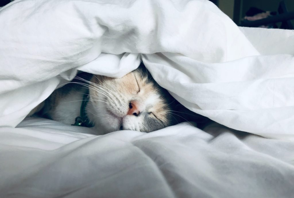 貓咪連續打噴嚏