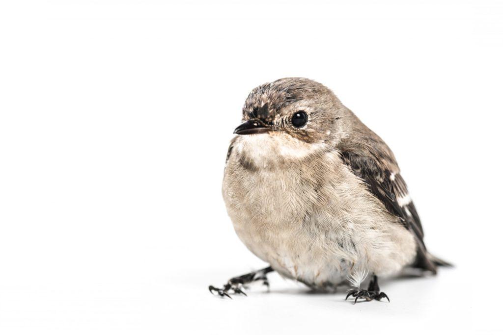 家中鳥類生病