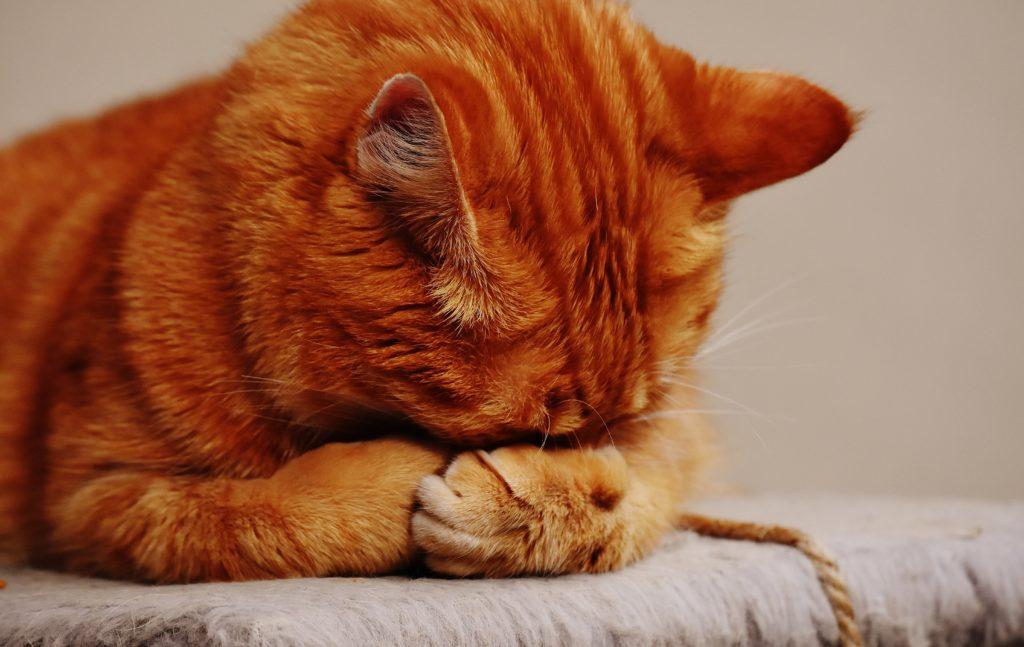 貓咪屁屁敏感有穴道