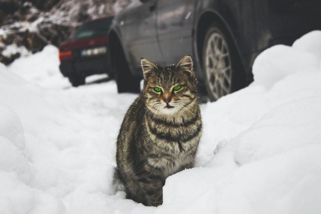 貓喜歡什麼味道