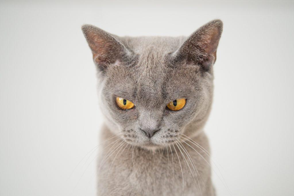 貓咪喜歡聞漂白水的味道