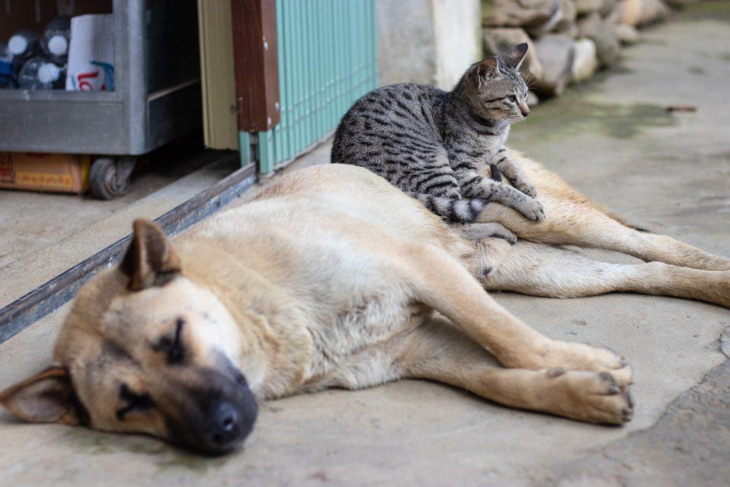 貓狗認識先認識品種