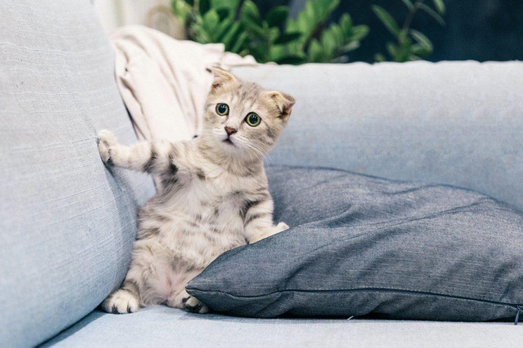 貓咪第二種怪異行為
